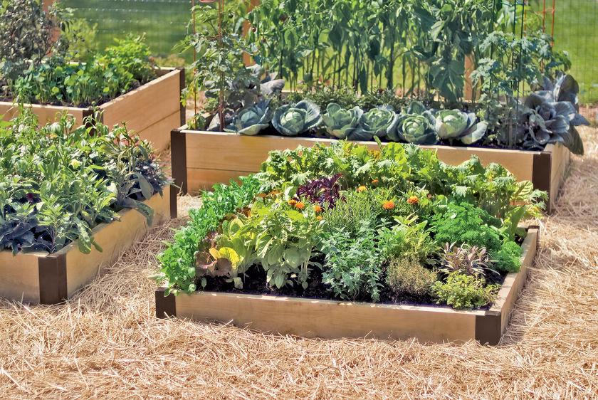 Kitchen Garden Planner | Backyard Gardeners
